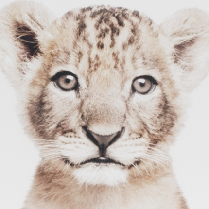 lovable cub canvas