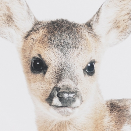 Lovable Fawn Canvas