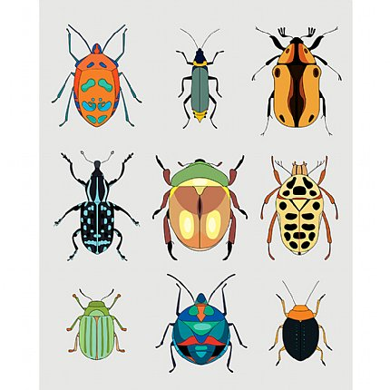 coleoptera and hemiptera print