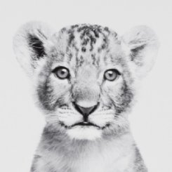 Loveable Cub